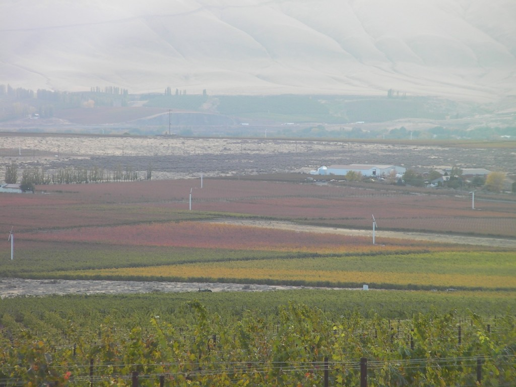Frost damage on Red Mountain in October 2009