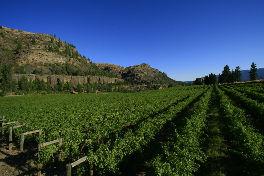 Only red Bordeaux varieties are planted at Lake Roosevelt Shores Vineyard, the 16-acre estate site for Whitestone Vineyard and Winery in Wilbur, Wash. (Courtesy of Michael Haig)