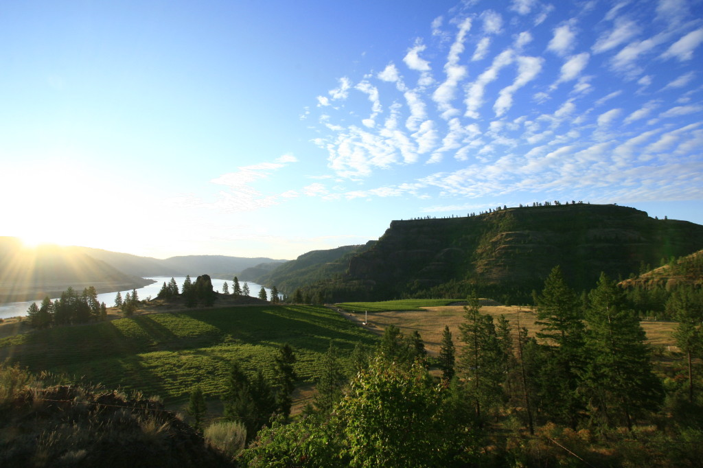 Lake Roosevelt Shores Vineyard is the 16-acre estate planting for Whitestone Vineyard and Winery in Wilbur, Wash. (Courtesy of Michael Haig)