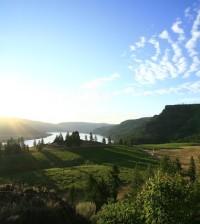 Whitestone Winery's vineyard