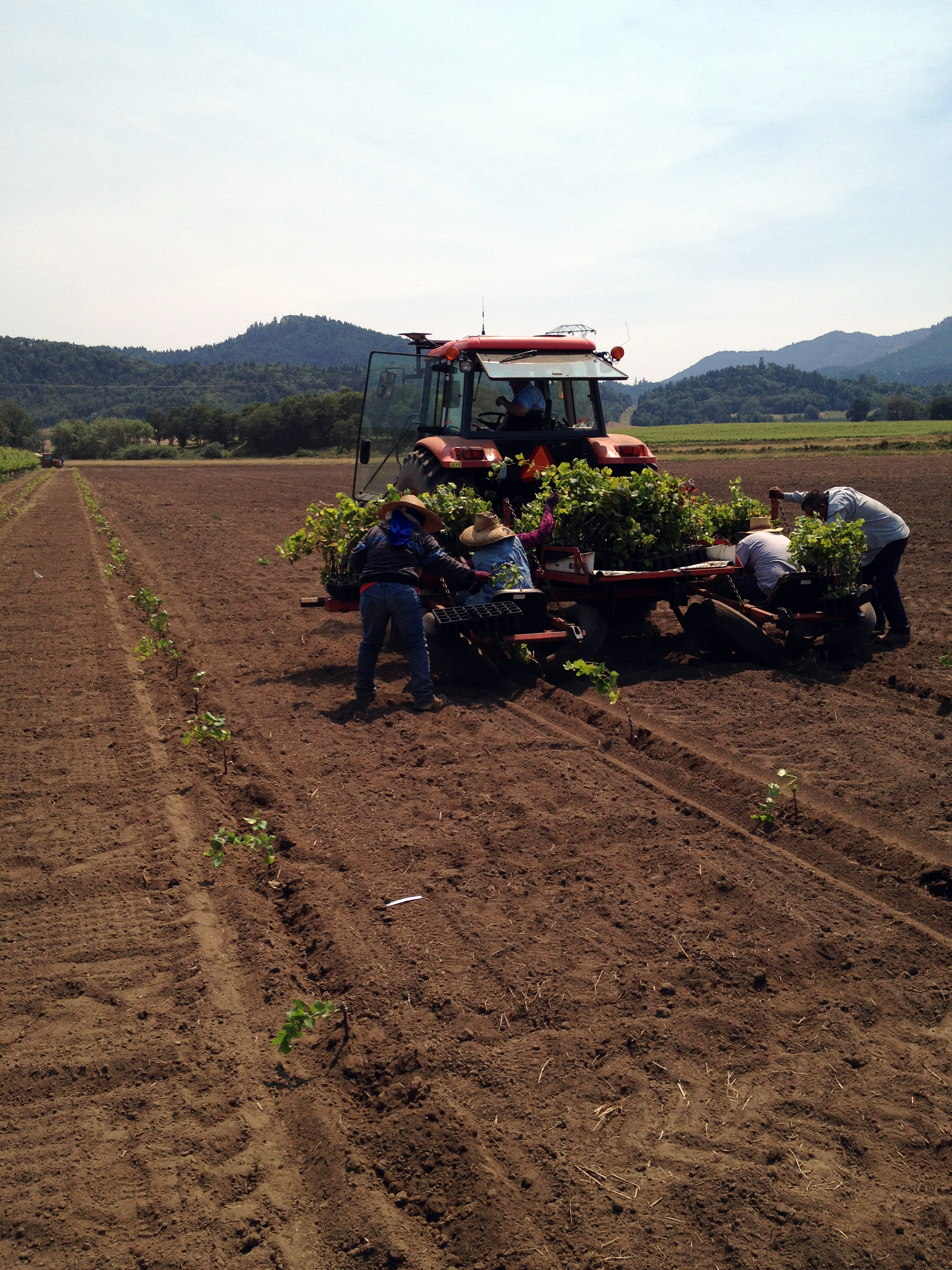 Duck Pond Cellars crew plants the last section of Coles Valley Vineyard in 2012. (Photo courtesy of Duck Pond Cellars).