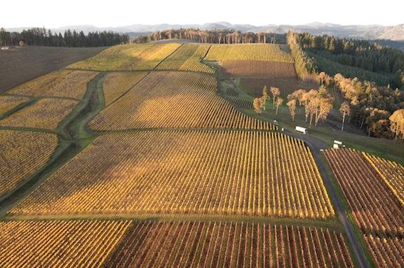 Hyland Vineyard in Oregon