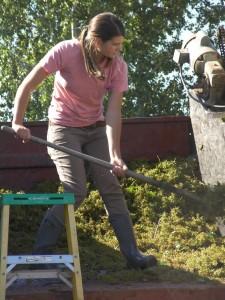 washington wine harvest