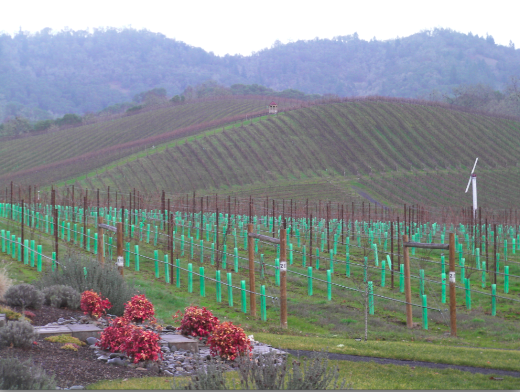 Abacela makes room in its Fault Line Vineyards for young plantings of Albarino and Tempranillo. (Eric Degerman/Great Northwest Wine)