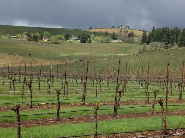 Oregon Wine Month encourages wine lovers to visit vineyards and wineries throughout the state during May. (Great Northwest Wine/Eric Degerman)