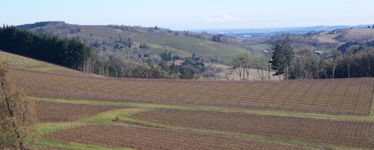 Hyland Vineyard near McMinnville, Ore., was first planted in 1971, making it one of the oldest sites for Pinot Noir in the Willamette Valley. (Photo courtesy of Alex Cabrera)