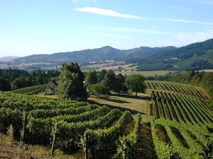 David Hill Vineyards and Winery in Forest Grove, Ore., features some of the oldest plantings in the Willamette Valley. (Photo courtesy of Jason Bull)
