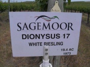 This block of Riesling at Sagemoor Farms' Dionysus Vineyard carries a born-on date of 1973. (Eric Degerman/Great Northwest Wine)