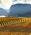 McIntyre Bluff north of Oliver overlooks some of the most important vineyards in British Columbia. (Photo courtesy of the BC Wine Institute)