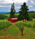 Olson Estate Vineyard Feat