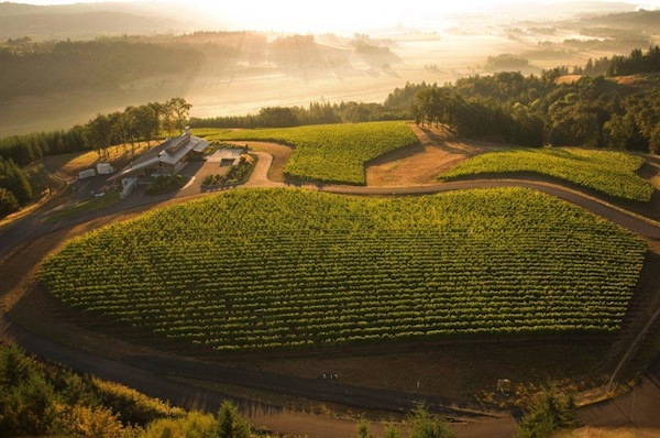 Penner-Ash Wine Cellars in Yamhill County near Newberg, Ore., will play host to two fundraising concerts in August. (Courtesy of Andréa Johnson Photography)