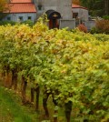 Rex Hill Winery and its biodynamic estate vineyard. (Photo by John Valls/Courtesy of Rex Hill)