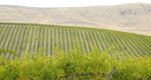 Yakima Valley Wine Competition
