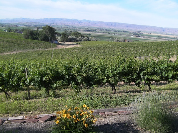 Bitner Vineyards on the Sunny Slope near Caldwell, Idaho, has been supplying Chardonnay to Snake River Valley winemakers for four decades. (Eric Degerman/Great Northwest Wine)