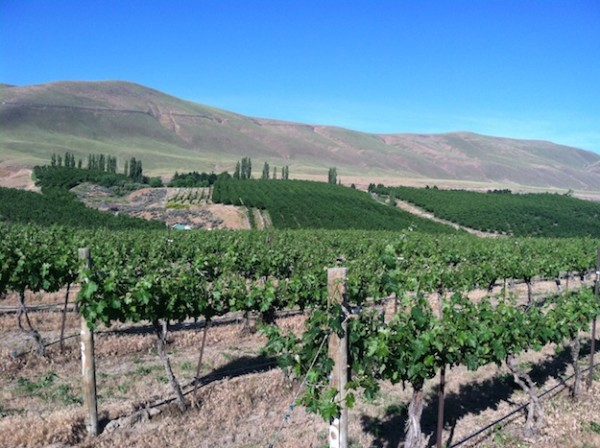 Precept Wine said Friday that it has purchased 174 acres in Kiona, Wash., near famed Red Mountain. Plans for expanding the recently renamed Skyfall Vineyard to more than 100 acres. (Photo courtesy of Precept Wine)