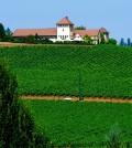king estate 2 120x134 - Oregon sets standard for Northwest Pinot Gris