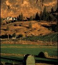 similkameen valley bcwi 120x134 - British Columbia Wine Institute elects 2 new board members