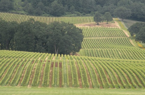 Stoller Vineyards is in Oregon's Dundee Hills in the northern Willamette Valley.