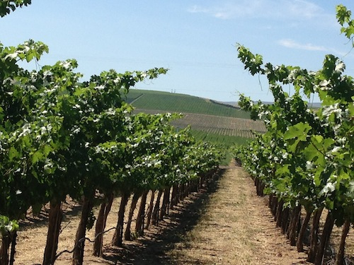 Wautoma Springs Vineyard is north of Washington's Yakima Valley.