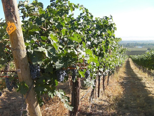 The Yakima Valley is the oldest viticultural area in Washington state.