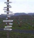 Abacela's Fault Line Vineyard in Southern Oregon ranks as one of the state's most well-known plantings.