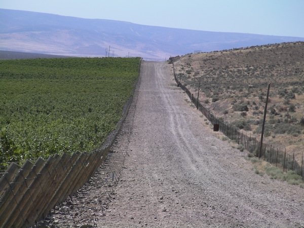 StoneTree Vineyard on the Wahluke Slope east of Mattawa, Wash., operates on a 25-year lease with the Department of Natural Resources. It is on the southern slope of the Saddle Mountains.