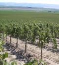 StoneTree soil feat 120x134 - Washington's great vineyards: StoneTree Vineyard