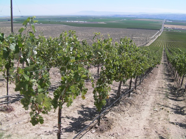 StoneTree Vineyard on the Wahluke Slope east of Mattawa, Wash., features a south-facing aspect with views of Rattlesnake Mountain in the distance.