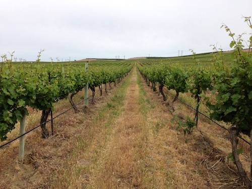 Bacchus Vineyard is part of Sagemoor Vineyards in Washington state.