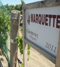 champoux marquette copy 120x134 - Washington's Powers Winery adds Marquette to lineup