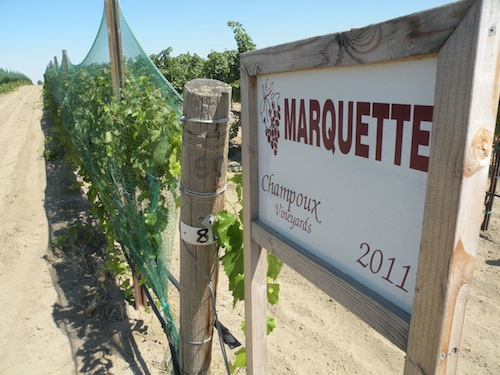 Paul Champoux grows Marquette grapes in Washington state's Horse Heaven Hills.