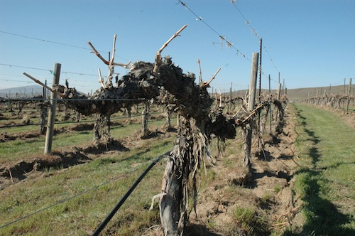 Ciel du Cheval Vineyard is on Red Mountain in Washington state.