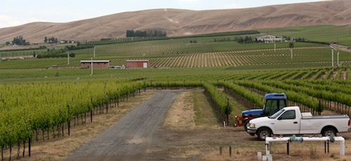Ciel du Cheval Vineyard is one of the oldest vineyards on Red Mountain in Washington state.
