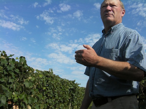 Dick Boushey grows Syrah at Boushey Vineyard in Grandview, Washington.