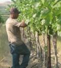 elephant mountain copy 120x134 - Washington's great vineyards: Elephant Mountain Vineyards