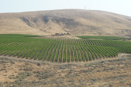 Elephant Mountain Vineyards is in the northwestern section of the Yakima Valley.