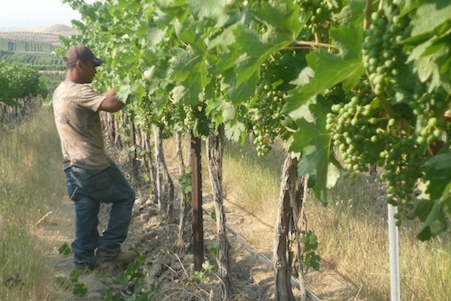 Elephant Mountain Vineyards is in Washington state's Rattlesnake Hills AVA.