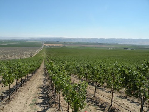 Washington state has 50,000 acres of wine grapes.