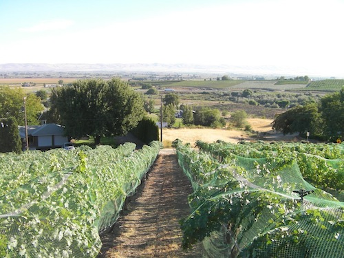 Harrison Hill is part of Upland Vineyard and is in the Snipes Mountain AVA in the Yakima Valley.