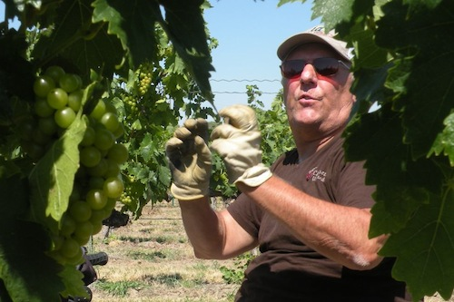 Paul Champoux is the owner of Champoux Vineyards in Washington's Horse Heaven Hills.