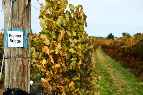 Pepper Bridge Vineyard is popular with wineries in Washington state.