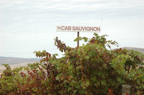 Red Willow Vineyard is in the far western Yakima Valley and is one of the state's oldest vineyards.