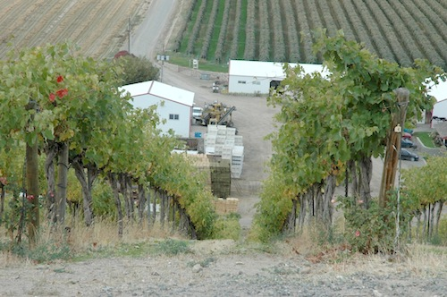 Red Willow Vineyard in Washington state's Yakima Valley has steep west-facing slopes.