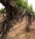 sagemoor feature 120x134 - Washington's great vineyards: Sagemoor Vineyards