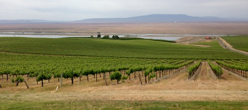 Dionysus Vineyard is part of Sagemoor Vineyards in Washington state.