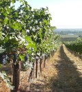 snipes 120x134 - Washington's great vineyards: Upland Vineyard