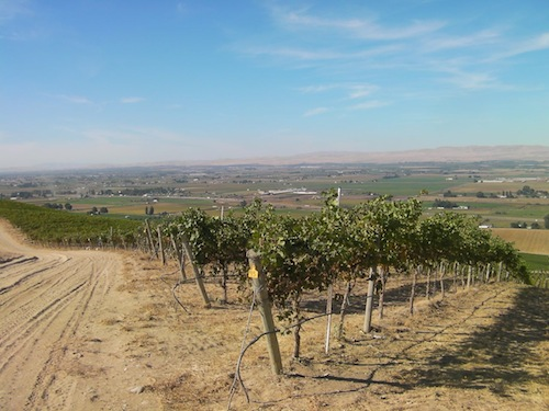Snipes Mountain is an American Viticultural Area in the middle of the Yakima Valley. Upland Vineyard is the largest vineyard on Snipes Mountain.