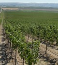 vineyard feature 120x134 - 10 Pacific Northwest Tempranillos to try today