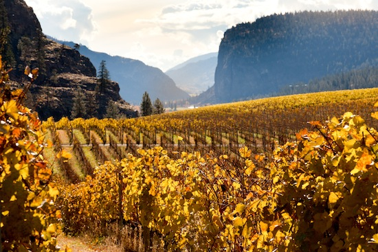 McIntyre Bluff is within sight of some of the finest vineyards in British Columbia's Okanagan Valley.