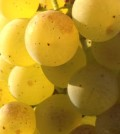 chardonnay feature 120x134 - A dozen Northwest Chardonnays to try now